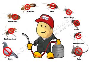 شركة مكافحة حشرات حولي
