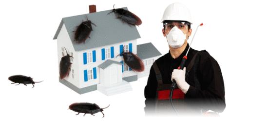 شركة مكافحة حشرات الظهر