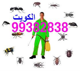حشرة البق او الكتان وطرق التخلص منها ؟