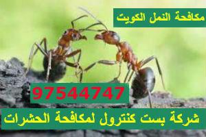 مكافحة النمل