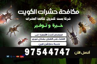شركة مكافحة حشرات بخيطان بالكويت