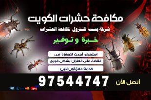 شركة مكافحة الحشرات بالسالمية بالكويت
