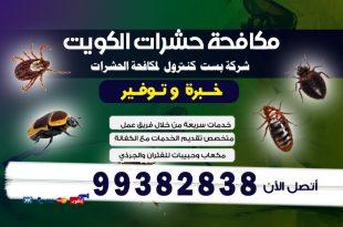 اضرار حشرة البق بالكويت