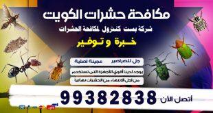 رقم مكافحة القوارض الكويت
