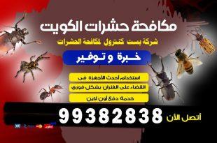 رقم مكافحة الحشرات في الكويت