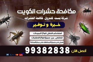 مكافحة حشرات وقوارض بالكويت