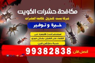 مكافحة القوارض في الكويت