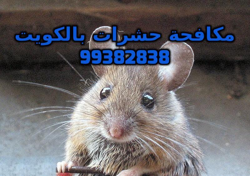 تليفون مكافحة القوارض بالكويت 99382838
