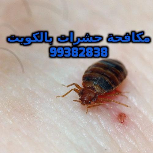 مبيدات البق شركة بست كنترول الكويت 99382838