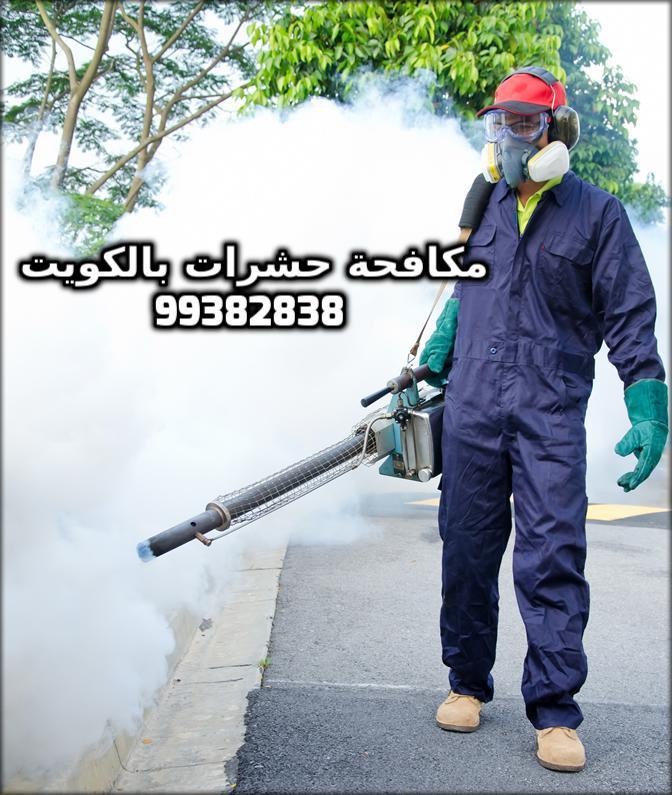 شركة مكافحة الحشرات بالمسيلة بالكويت 99382838