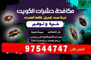 مكافحة النمل الابيض قبل البناء في الكويت