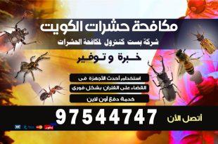 كيف تقضي على النمل الابيض في الكويت