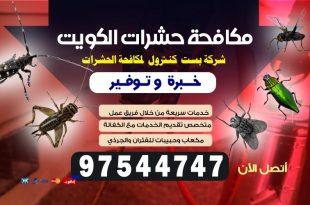 مكافحة النمل الأبيض في الكويت