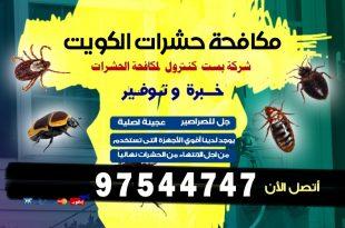 طرق مكافحة الأرضة في المنازل بالكويت
