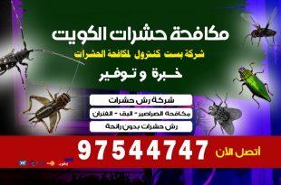أفضل مبيد للنمل الابيض في الكويت