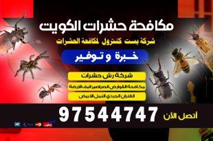 كيف تقضي على النمل الأبيض بالكويت