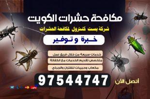مكافحة الجرذان في الكويت