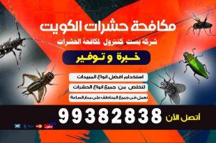 كيفية القضاء على الفئران في المجاري بالكويت