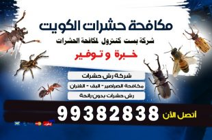 كيف اتخلص من النمل الاسود في الكويت