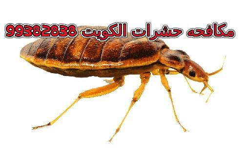 مكافحة بق الفراش في الكويت 99382838