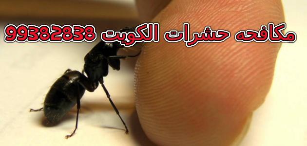 مبيد النمل في الكويت 99382838
