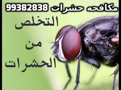 حشرات المنزل الزاحفة في الكويت 99382838