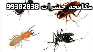 كيفية التخلص من الحشرات الزاحفة في المنزل بالكويت 99382838