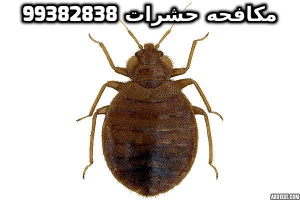 مكافحة الحشرات الطائرة في الكويت 99382838