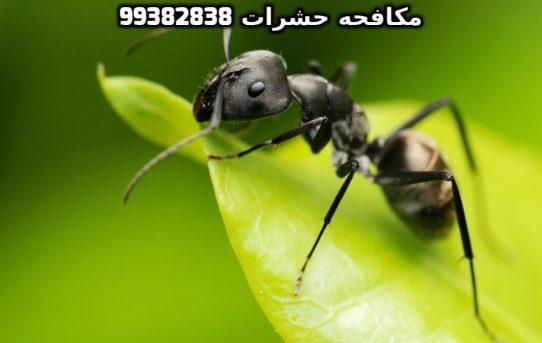 طريقة التخلص من الحشرات المنزلية بالكويت 99382838