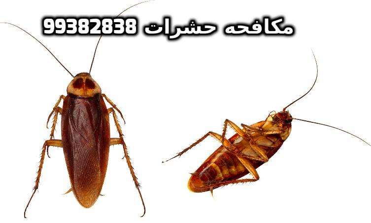 حشرات المنزل الطائره بالكويت 99382838