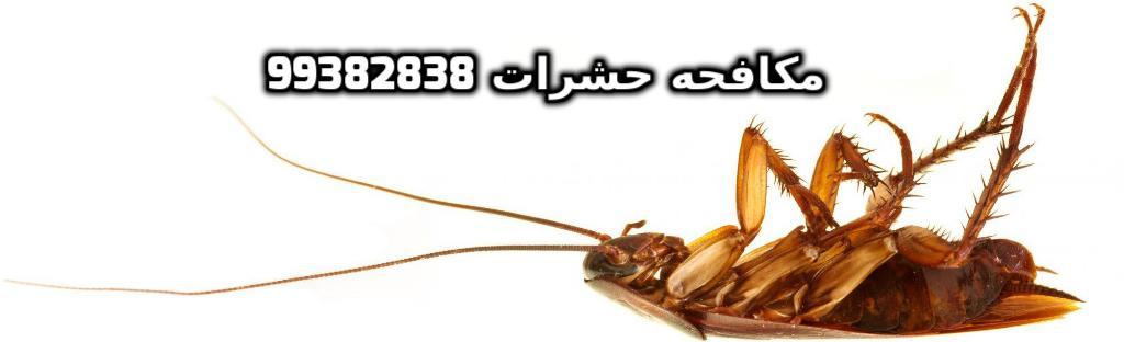 حشرات البق في الكويت 99382838