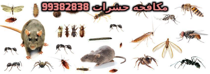 كيف اتخلص من الحشرات الصغيره في المطبخ بالكويت 99382838