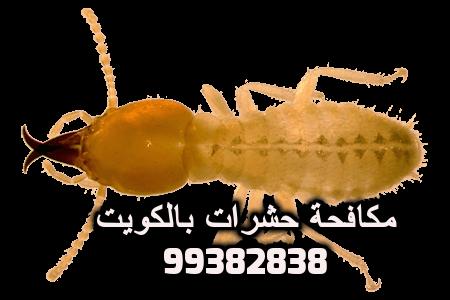 كيف تقضي على النمل الابيض في الكويت 99382838