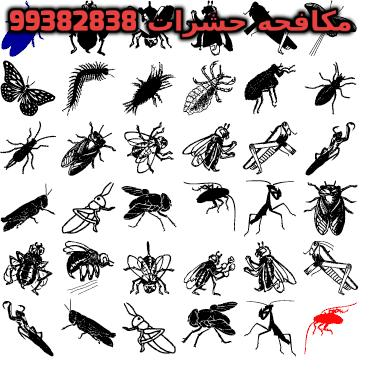 حشرات المنزل بالصور بالكويت 99382838
