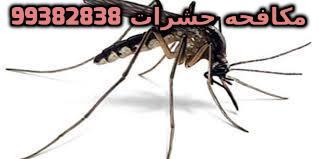 حشرات صغيره طائره في المنزل في الكويت 99382838