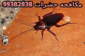 كيف اتخلص من الحشرات الصرصور 99382838