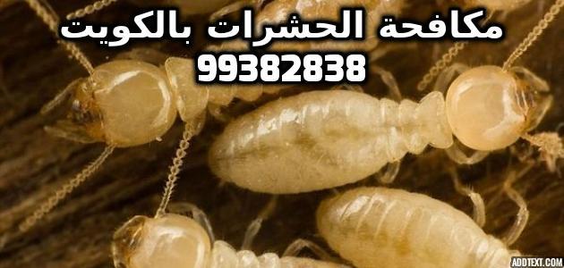 كيف تقضي على النمل الأبيض بالكويت 99382838