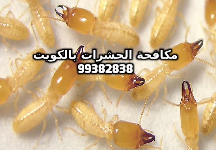أفضل مبيد للنمل الابيض في الكويت 99382838