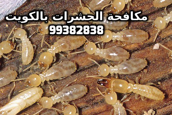 مكافحة الارضة فى البيت بالكويت 99382838