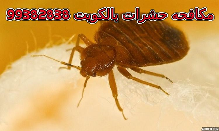 طرق التخلص من البق نهائيا في الكويت 99382838