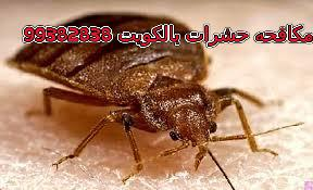 مبيدات البق في الكويت 99382838