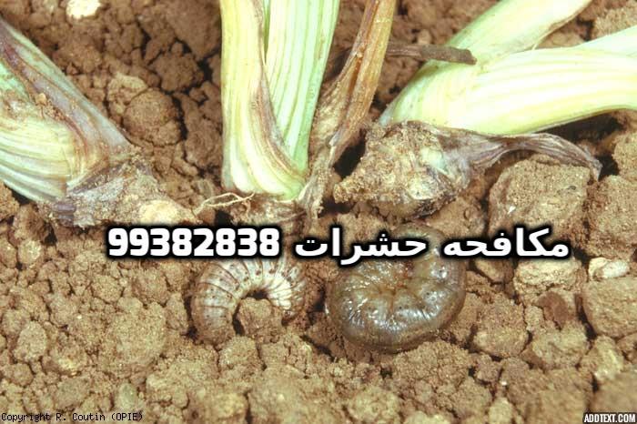 مكافحة الارضة في الكويت 99382838