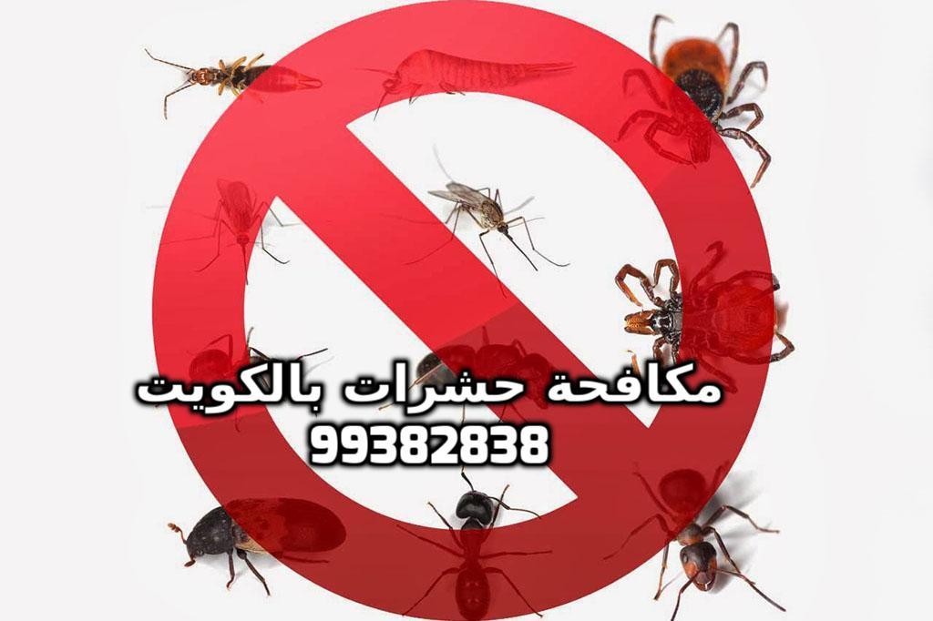 كيف أقضي على الحشرات في البيت بالكويت 99382838