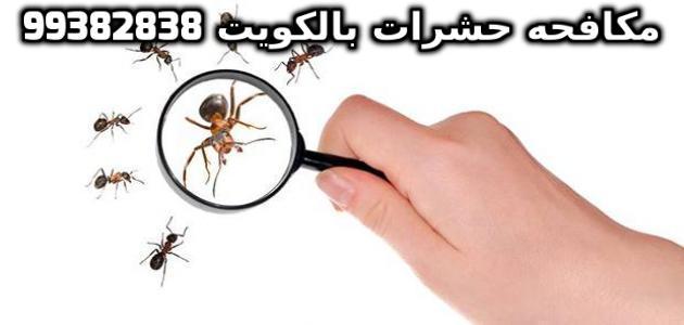 مكافحة النمل بالكويت 99382838