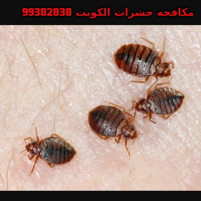 مكافحة العثة المنزليه في الكويت 99382838