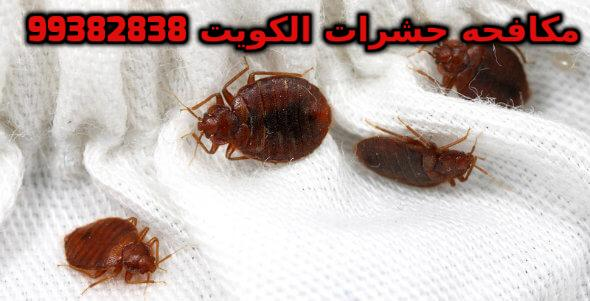 المكافحة تخلص من العته في الكويت 99382838