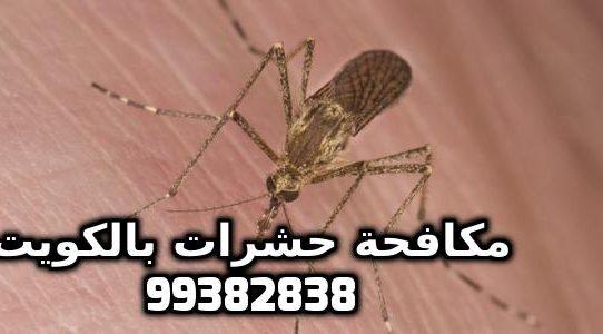 كيف أطرد البعوض من المنزل بالكويت 99382838