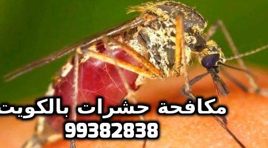 وسائل مكافحة البعوض باختصار بالكويت 99382838