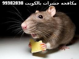 مكافحة الفئران بالكويت 99382838