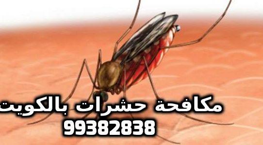 كيف تتخلص من البعوض خصوصاً ليلاً بالكويت 99382838